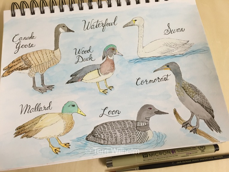 week 9 sketchbook page waterfowl