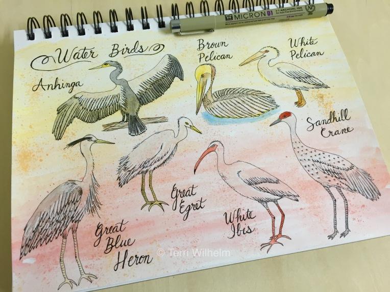 Sketchbook page week 10 water birds
