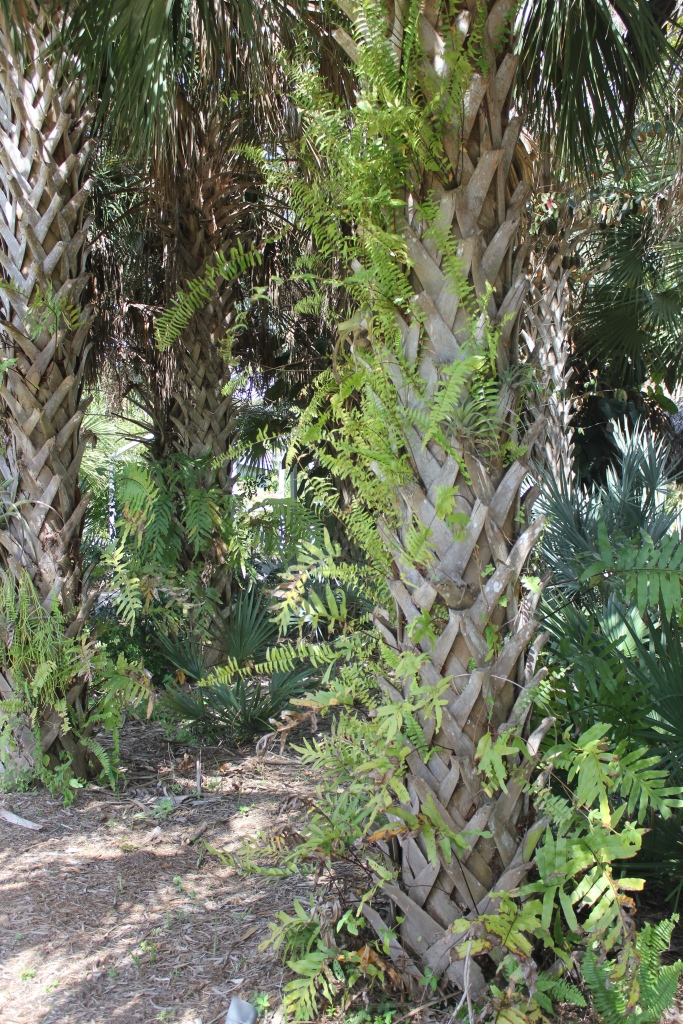 palm trees and ferns at botanical gardens