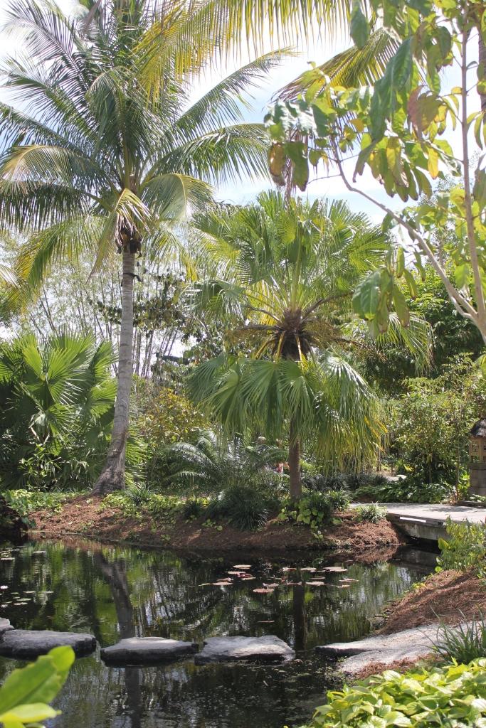 palms at botanical gardens
