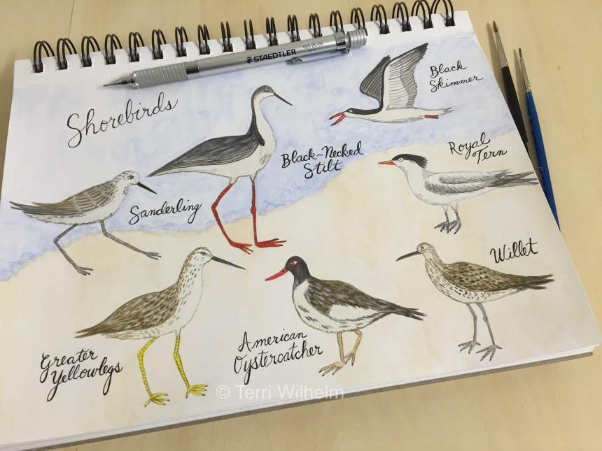 shorebirds sketchbook page