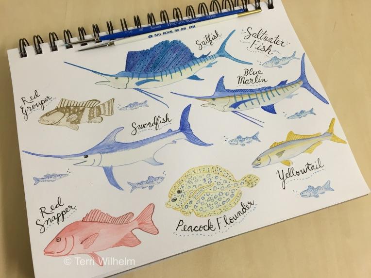 week 15 saltwater fish sketchbook page