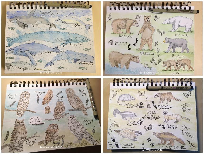 animal art weeks 5-8