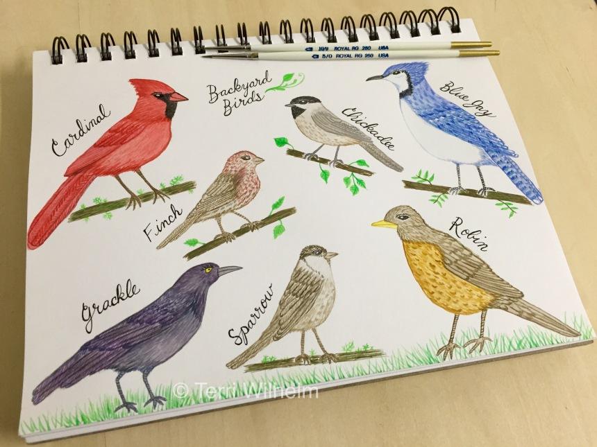 week 17 sketchbook page backyard birds