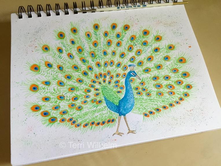 week 19 sketchbook page peacock