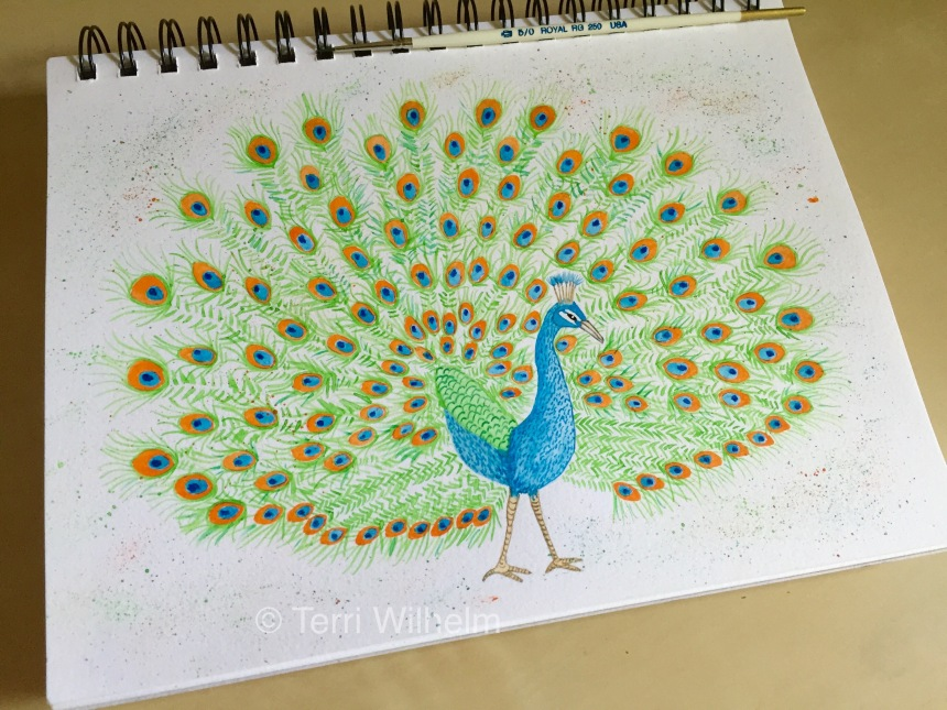 week 19 sketchbook page peacock