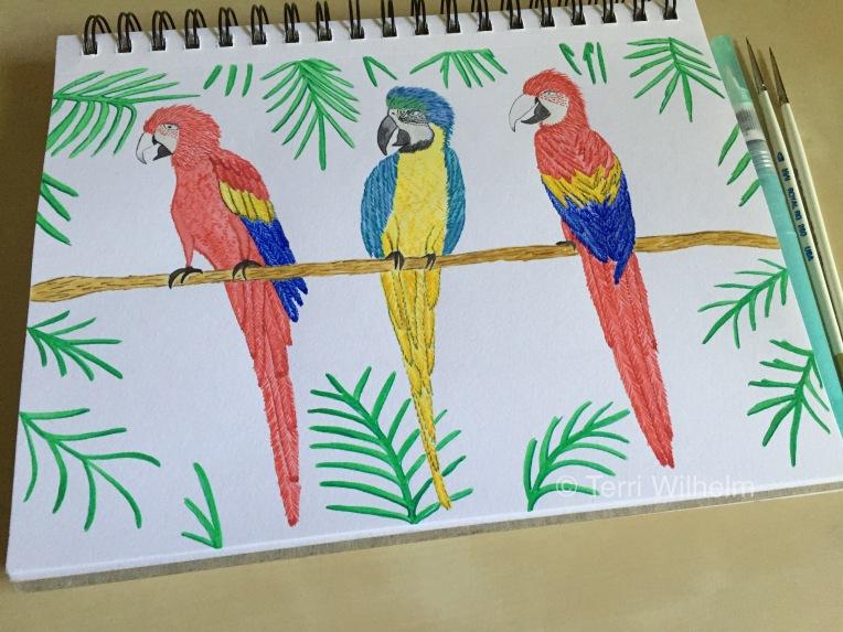 week 20 animal art macaws