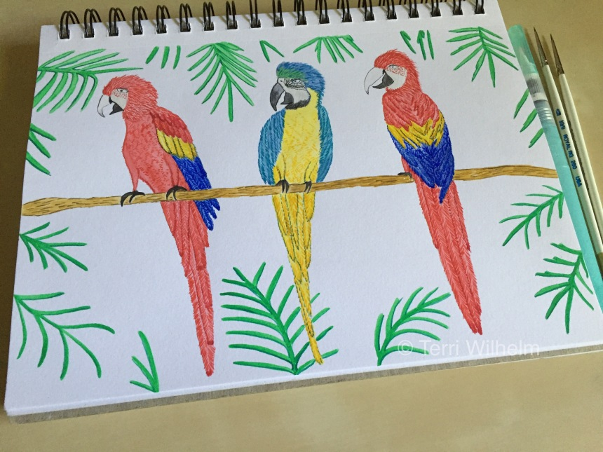 week 20 animal art macaws