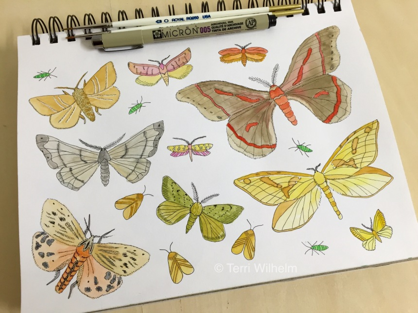 week 25 animal art moths