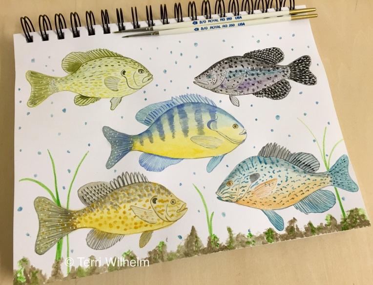 week 31 animal art sunfish