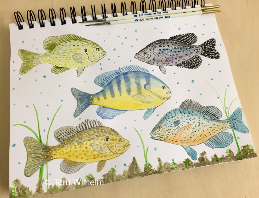week 31 animal art sunfish