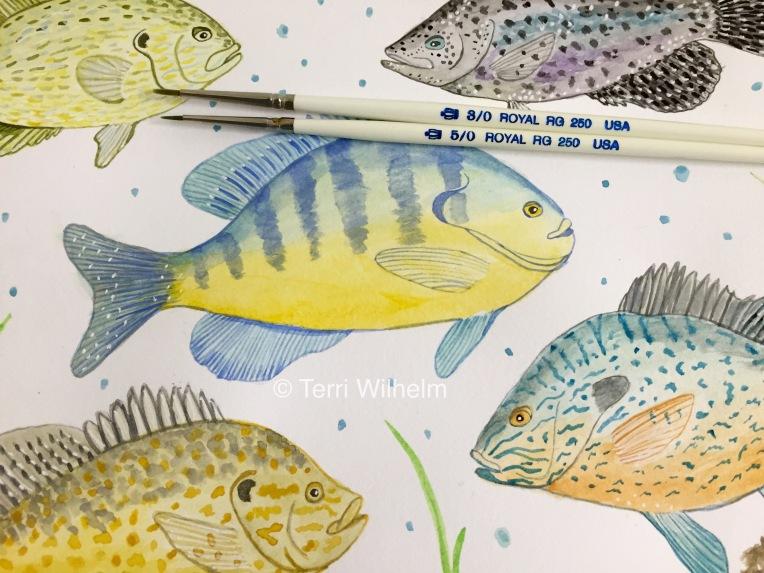 week 31 animal art sunfish closeups