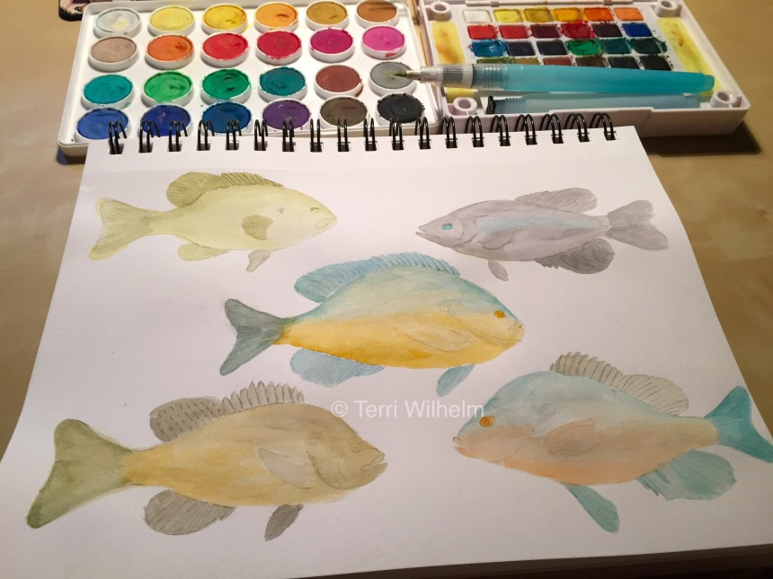 week 31 animal art sunfish watercolor