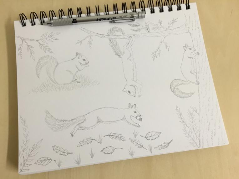 week 35 animal art squirrels sketch