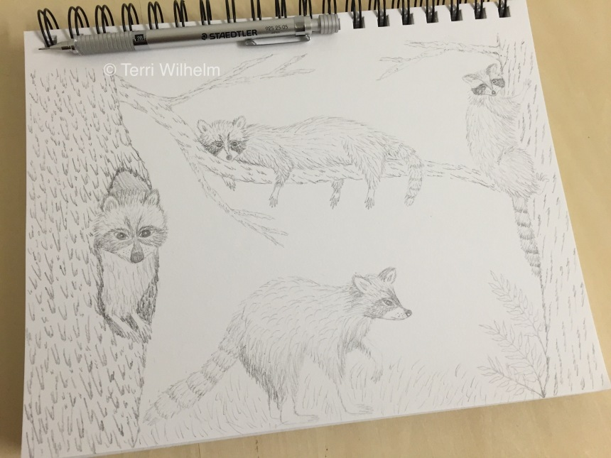 week 35 raccoon pencil sketch