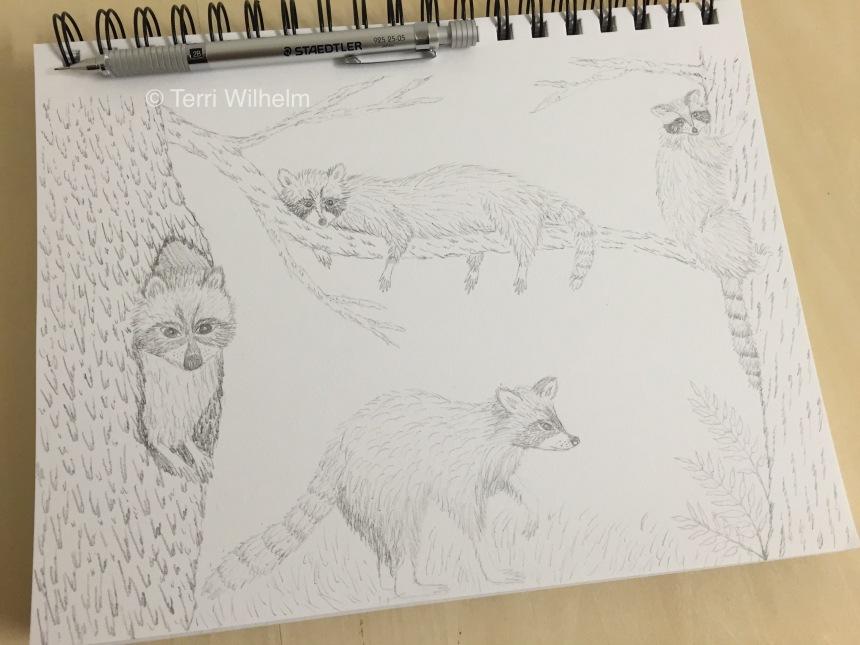 week 35 raccoon pencil sketch