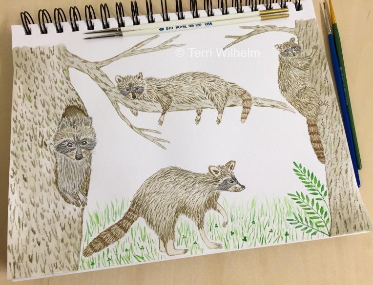 week 35 raccoon illustrations