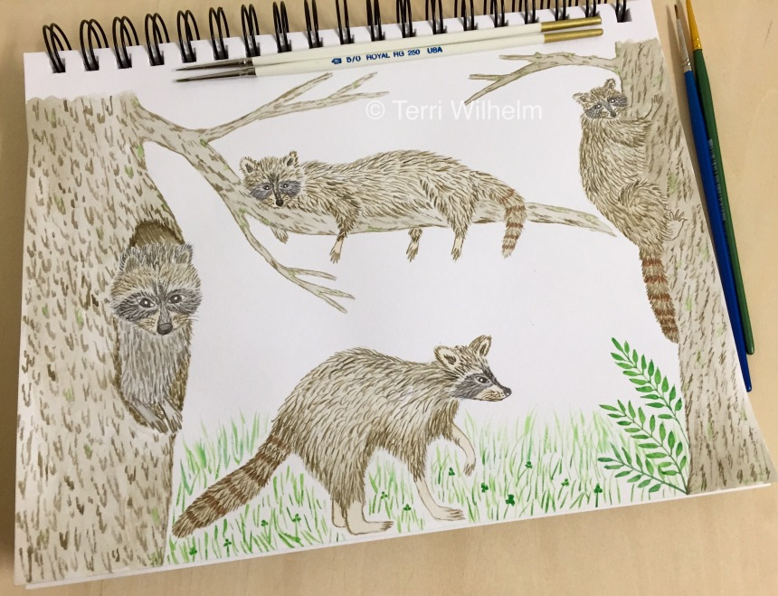 week 35 raccoon illustrations