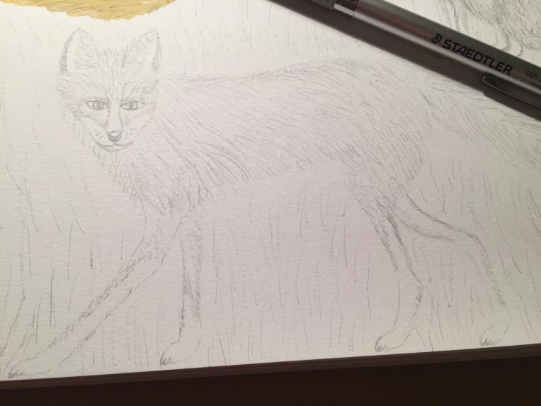 week 37 animal art fox sketch
