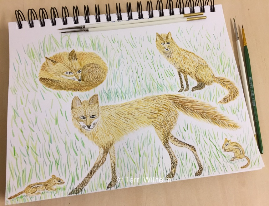 week 37 animal art fox