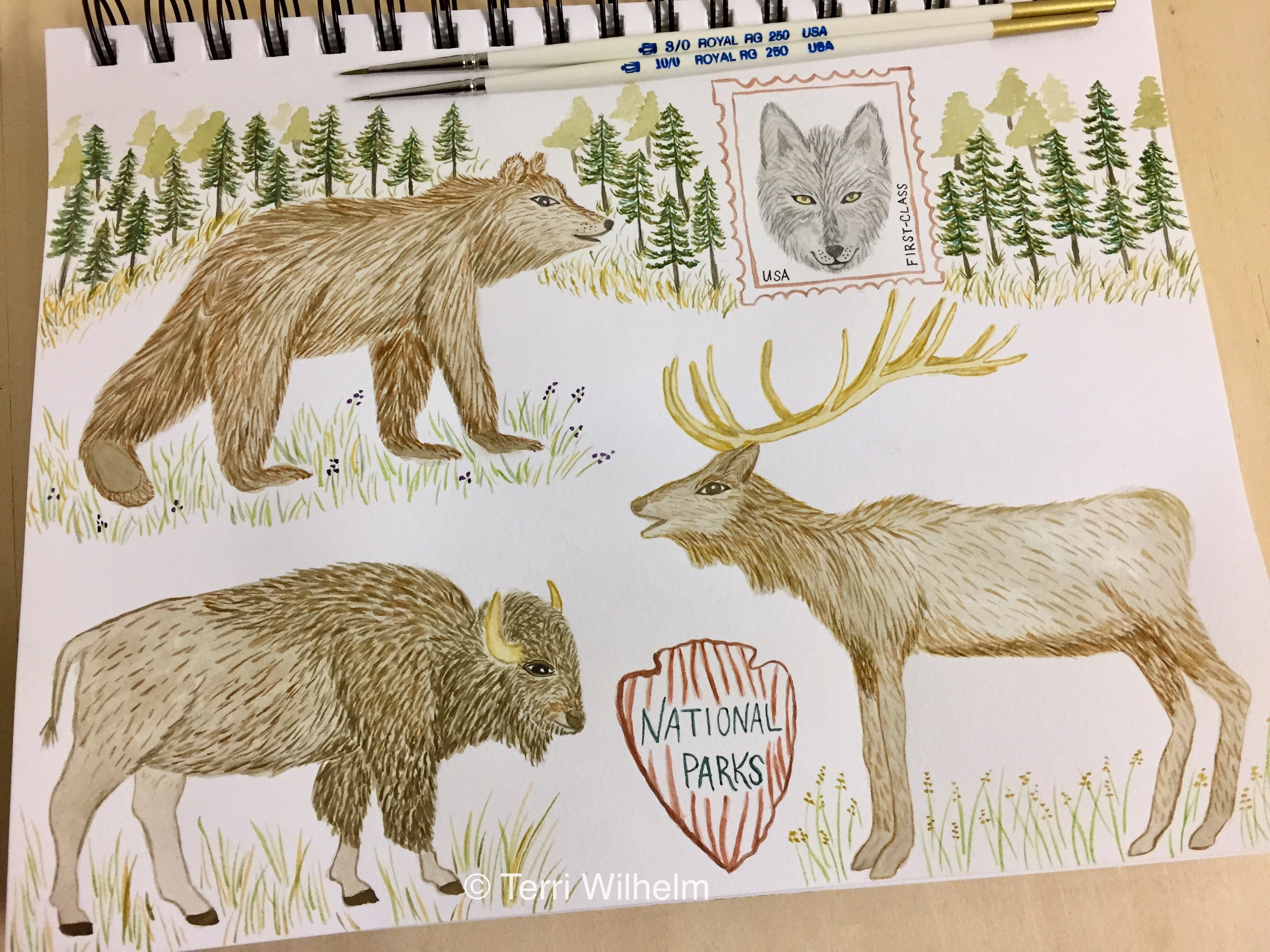Week 39 Animal Art Series National Parks Wildlife Terri S Notebook